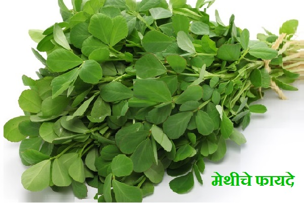 Benefits of Methi
