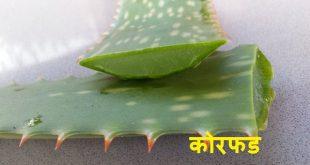 Benefits of Aloe vera in Marathi