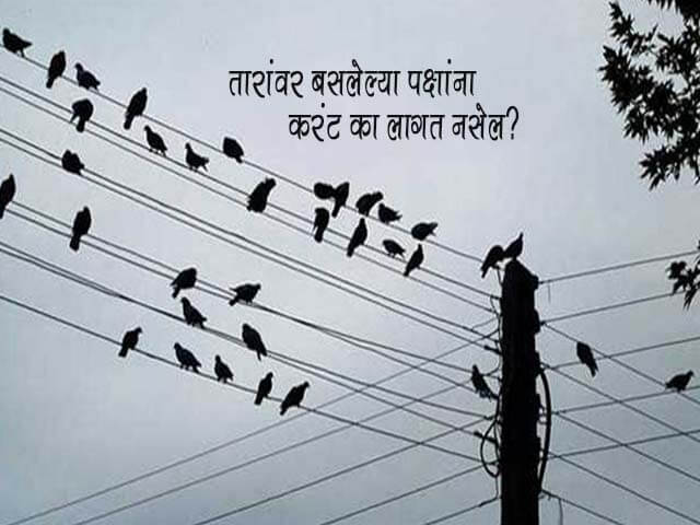 Why Don't Birds Get Electrocuted on Electric Wires