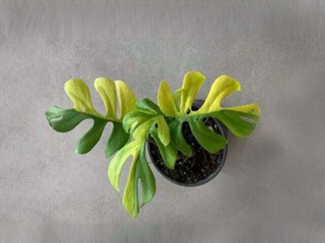 Expensive House Plants