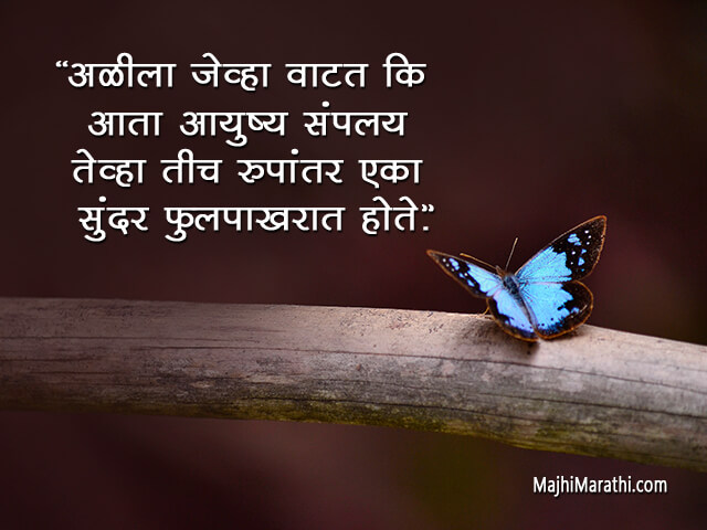 Butterfly Quotes in Marathi